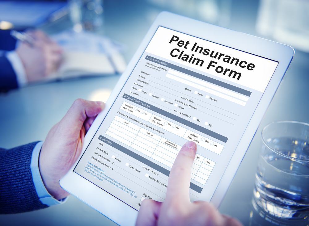 Pet Insurance Claim Form Concept