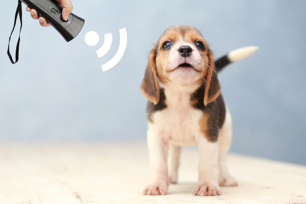 The BarxBuddy pet gadget is designed to be taken on the go, and be where ever you and your dog are.