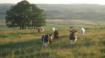 OSI Group's Johnson-Hoffman Discusses Importance of Global Roundtable for Sustainable Beef