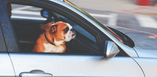 How to Find a Vehicle That is Suitable for Transporting Your Pets